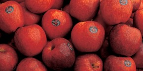 manzanas-home